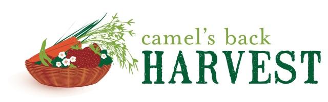 camelsback logo