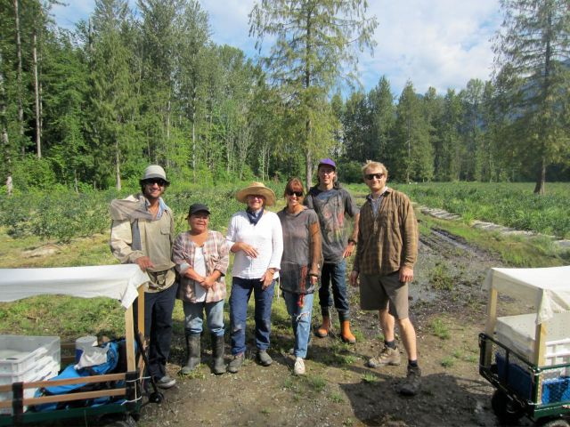 The first harvesting crew, July 2012