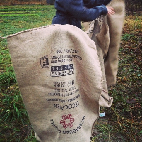 Burlapping the Tea Plants with coffee from our partner Saltspring Coffee to help them survive the cold in Pemberton