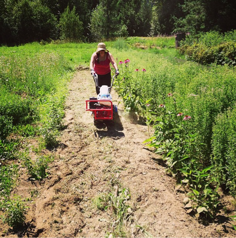 Isabelle rototilling the weeds and prpping to expand the Wintergreen row
